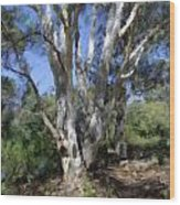 Australian Native Tree 5 Wood Print