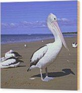 Australian Pelican On Beach Wood Print