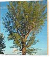 Australian Pine At Sundown Wood Print
