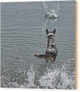 Australian Shepherd Fun At The Lake Chasing The Ball Wood Print