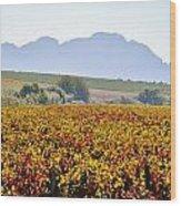 Autum Wine Field Wood Print