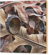Autumn Acorn And Oak Leaves Wood Print by Jennie Marie Schell