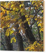 Autumn Wood Print by Anonymous