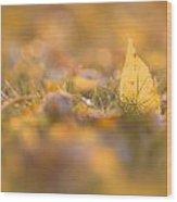 Autumn Ash Leaves Wood Print