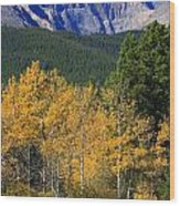 Autumn Aspens And Longs Peak Wood Print