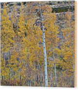Autumn Aspens Wood Print by James BO  Insogna
