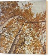 Autumn Aspens Wood Print