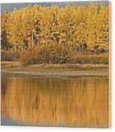 Autumn Aspens Reflected In Snake River Wood Print