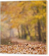 Autumn At Great Falls Wood Print