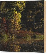 Autumn At It's Finest Wood Print by Thomas Young