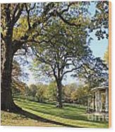Autumn At Runnymede Uk Wood Print