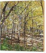 Autumn At Waterfall Glen Wood Print