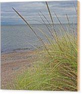 Autumn Beach Grasses Wood Print