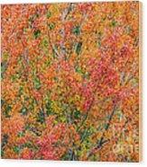 Autumn Outbeats Summer Wood Print