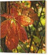 Autumn Begins 2 Wood Print