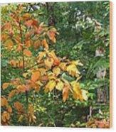 Autumn Begins At Breakheart Reservation Wood Print