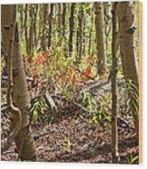 Autumn Begins Wood Print