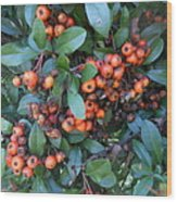 Autumn Berries In Michigan Wood Print