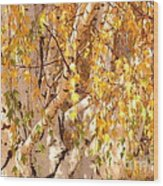 Autumn Birch Leaves Wood Print
