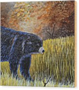 Autumn Black Bear Wood Print
