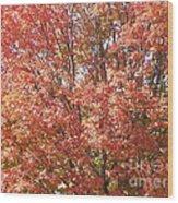 Autumn Blaze Wood Print by Kevin Croitz