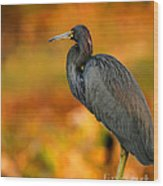 Autumn Blue Heron Wood Print