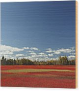 Autumn Blueberry Field Maine Wood Print by Scott Leslie