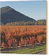 Autumn Blueberry Panorama Wood Print