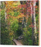Autumn Boardwalk Wood Print by Bill Wakeley