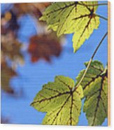 Autumn Bokeh  Wood Print by Chris Anderson