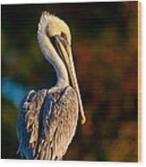 Autumn Brown Pelican Wood Print