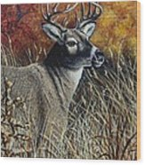 Autumn Buck Wood Print