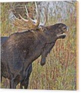 Autumn Bull Moose II Wood Print