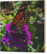 Autumn Butterfly Wood Print