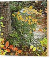 Autumn By A Pennsylvania Mountain Stream Digital Art Wood Print