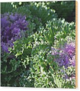 Autumn Cabbage Wood Print