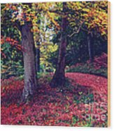 Autumn Carpet In The Enchanted Wood Wood Print