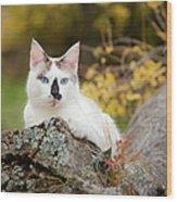 Autumn Cat Wood Print
