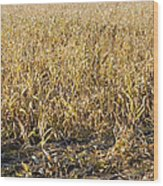 Autumn Cattle Silage Corn In Maine Wood Print by Keith Webber Jr