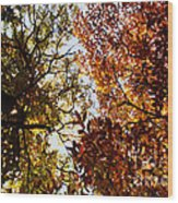 Autumn Chestnut Canopy   Wood Print
