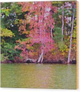 Autumn Color In Norfolk Botanical Garden 1 Wood Print