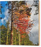 Autumn Color In The Trees Wood Print