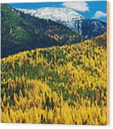 Autumn Color Larch Trees In Pine Tree Wood Print