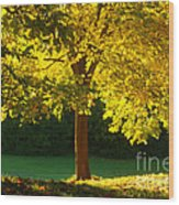 Autumn Colors 10 Wood Print