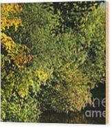 Autumn Colors 3 Wood Print