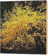 Autumn Colors 4 Wood Print