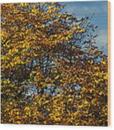 Autumn Colors 5 Wood Print