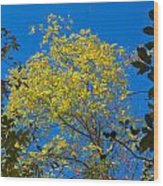 Autumn Colors Against The Sky Wood Print