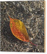 Autumn Colors And Playful Sunlight Patterns - Cherry Leaf Wood Print