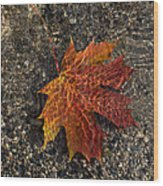 Autumn Colors And Playful Sunlight Patterns - Maple Leaf Wood Print